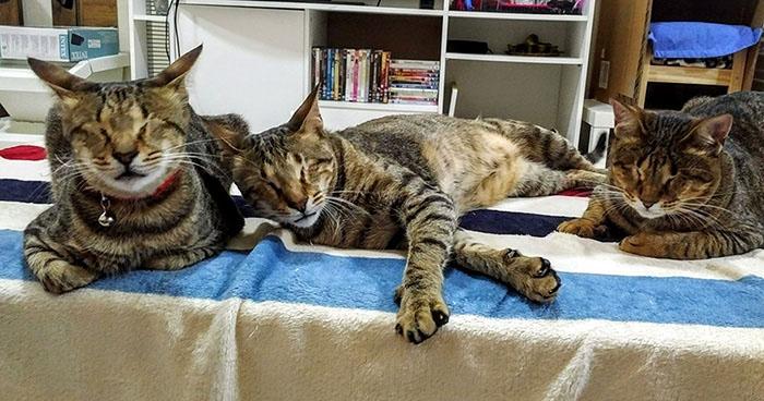 Слепые коты наконец-то нашли свой новый дом.