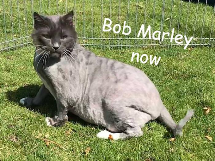 Кот Боб Марли сейчас.