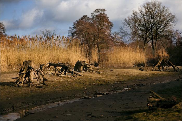 Дорога и поваленные деревья.