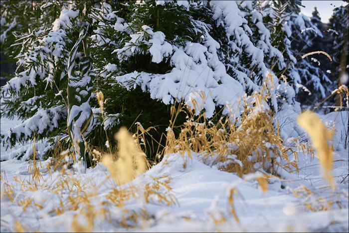 В снегах.