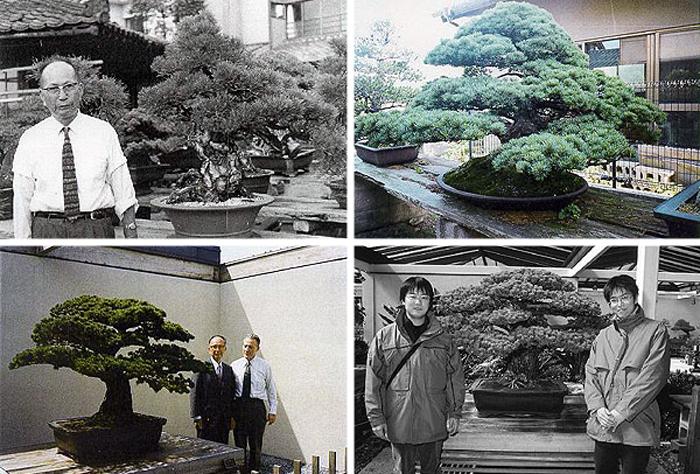 Масару Йамаки на фоне подаренной сосны, а также его внуки, посетившие Национальный Дендрарий в 2001 году.