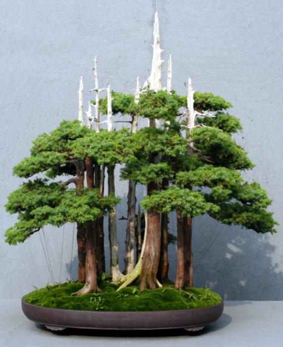 Композиция из деревьев-бонсай.