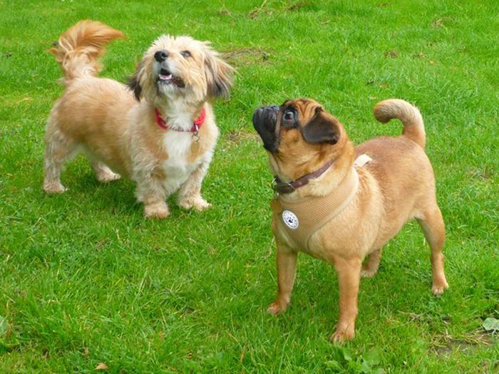 Сейчас обе собаки пристроены в хорошие семьи.