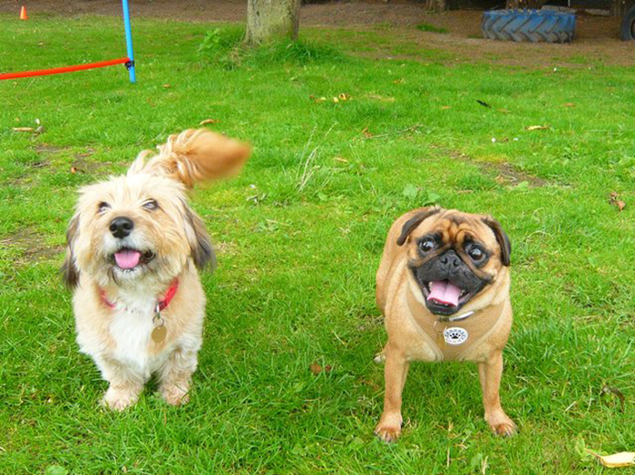 Патси и Фиби - собаки, спасшиеся от рук несознательного заводчика.