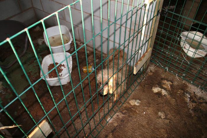 Когда зоозащитники пришли к Рики Найту, они обнаружили двух живых собак и одну мертвую.