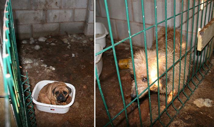 Собаки, живущие в ужасных условиях.