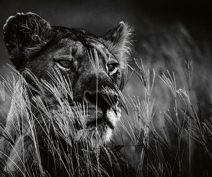 Черно-белые снимки дикой природы.