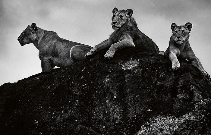 Фотографии африканской саванны.