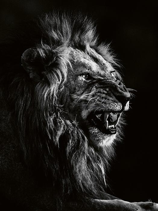 Величественные животные.