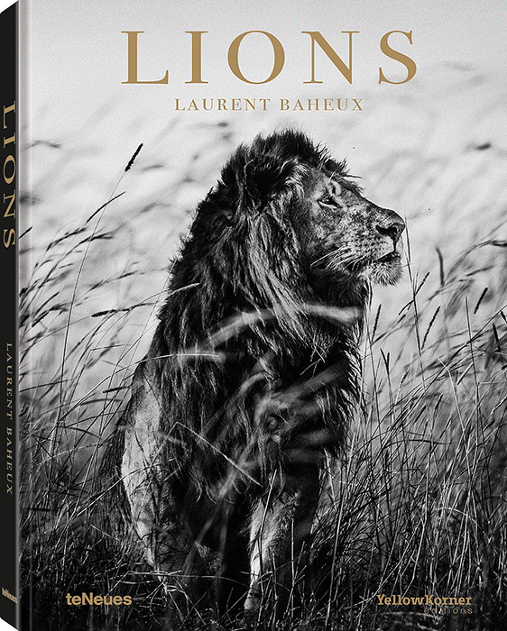 Книга Лорана Бахо *Львы*.