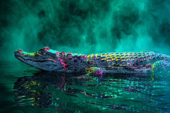 Фантастический мир рептилий. Автор фото: Andrew McGibbon.