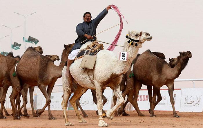 Мужчина приветствует публику, сидя на одном из своих верблюдов.