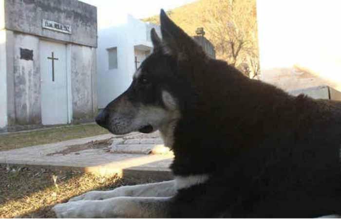Капитан — верный пес, который приходит на могилу своего хозяина вот уже 11 лет