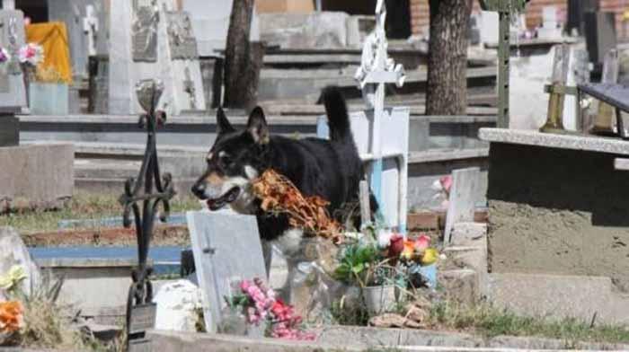 Вдова Гусман хотела забрать собаку домой, но Капитан отказался покидать могилу своего хозяина.