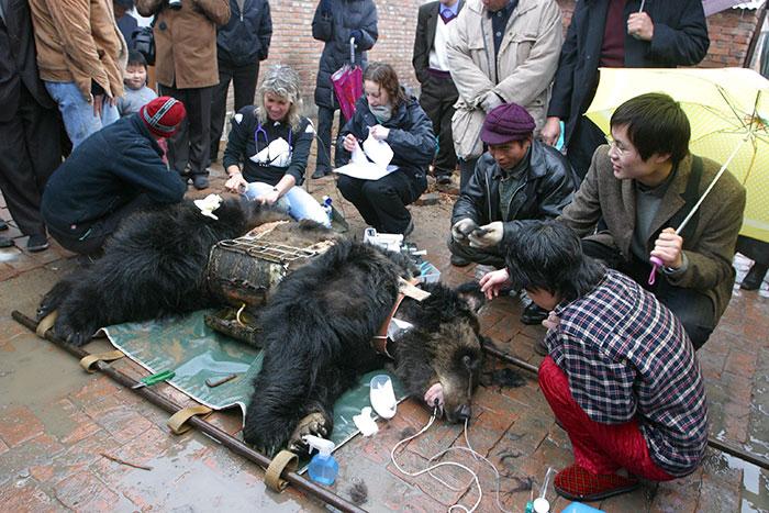 Медведицу спасли из ужасных условий на желчной ферме.