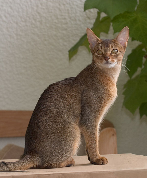 Средний размер домашней кошки - 4-5 кг.