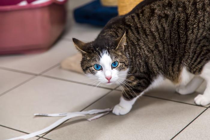 В разное время на Кошачьей Лодке может быть разное количество котов.