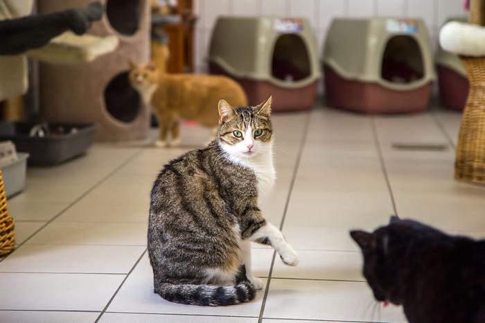 Остальные коты ждут своей очереди на обретение новых хозяев и новый дом.