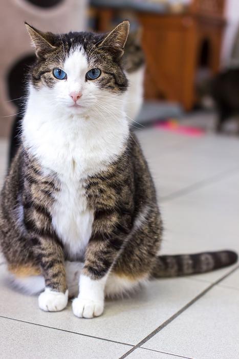 Не каждый кот на лодке рад ласке от людей, некоторые коты так навсегда и остаются полудикими.