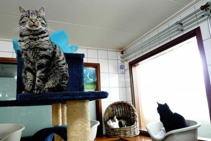 Все коты на лодке стерилизованы.