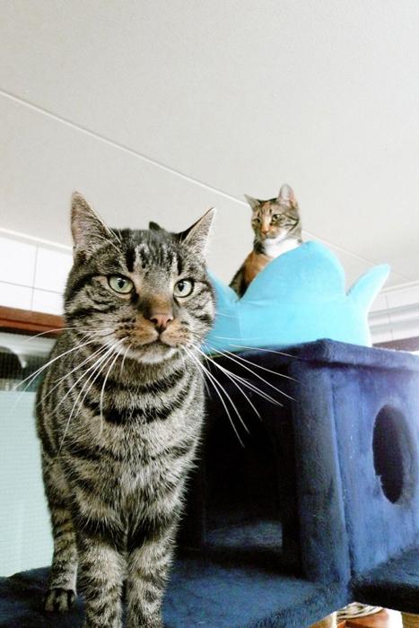 Каждый новый кот обязательно сначала проводит время на карантине.