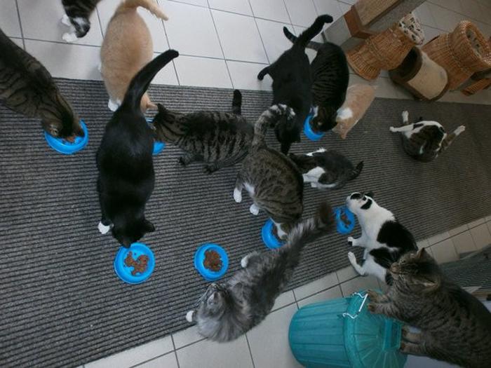 Большинство кошек на лодке некогда были уличными котами.