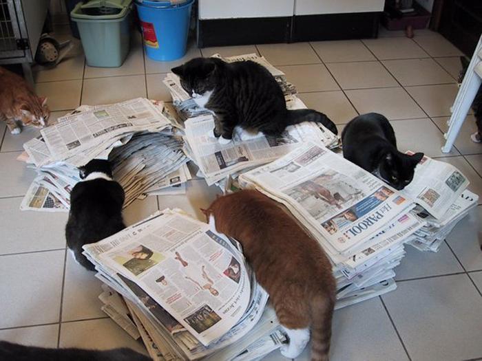 На лодке котам всегда есть чем заняться.