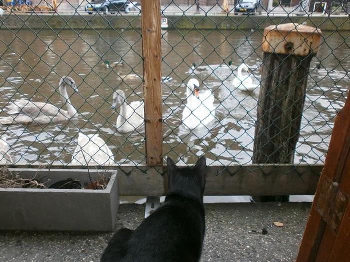 Лодка огорожена сеткой, чтобы коты не могли снова убежать и стать уличными котами.