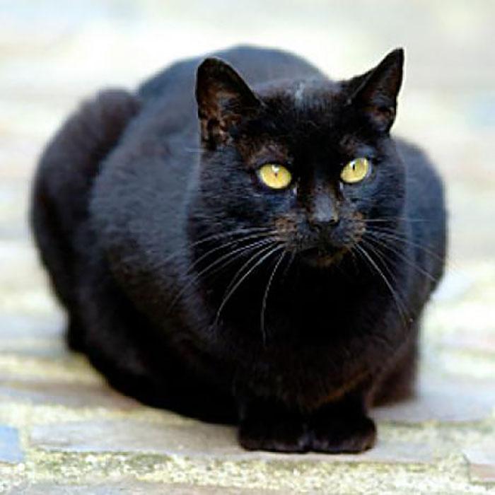 В Средние века кошки считались посредниками Сатаны и даже его воплощением.