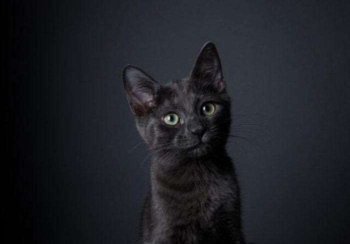 Кошек массово уничтожали в ходе работы инквизиции.