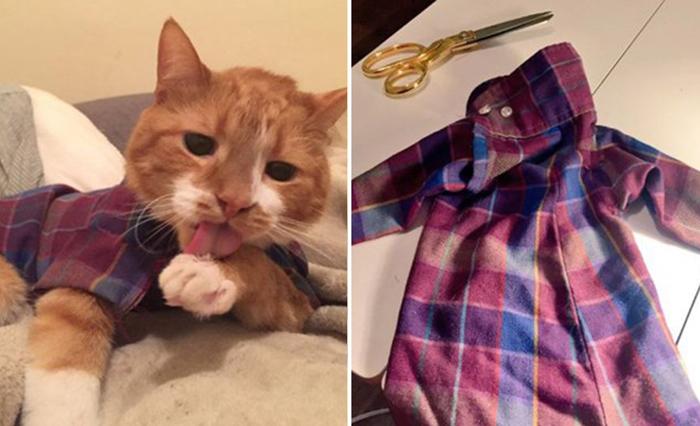 Одежда для кота.