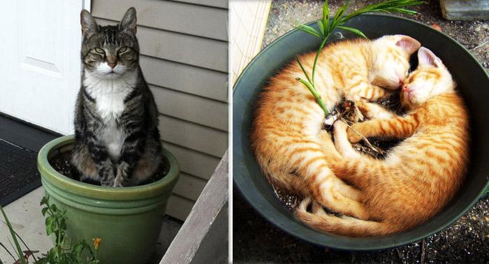 Коты в цветочных горшках.