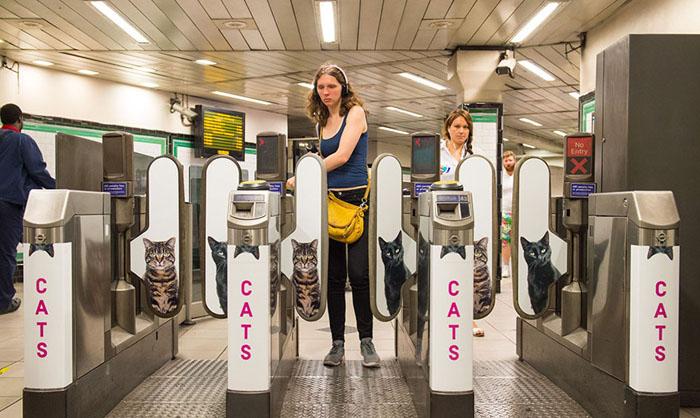 Котики заполонили все пространства в метро.