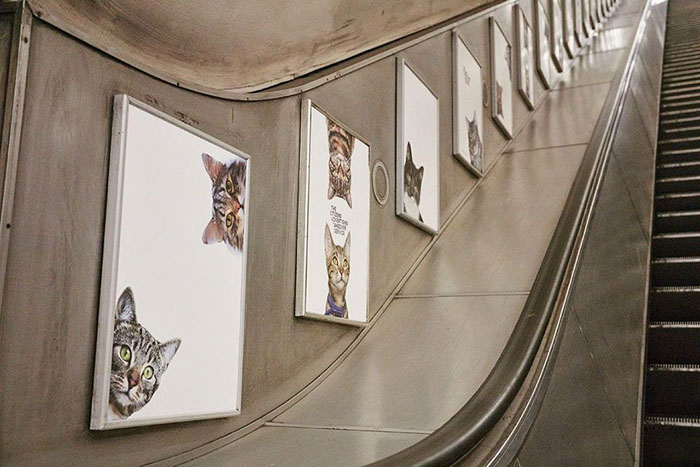 На всей станции - ни одной рекламы, зато море котов.