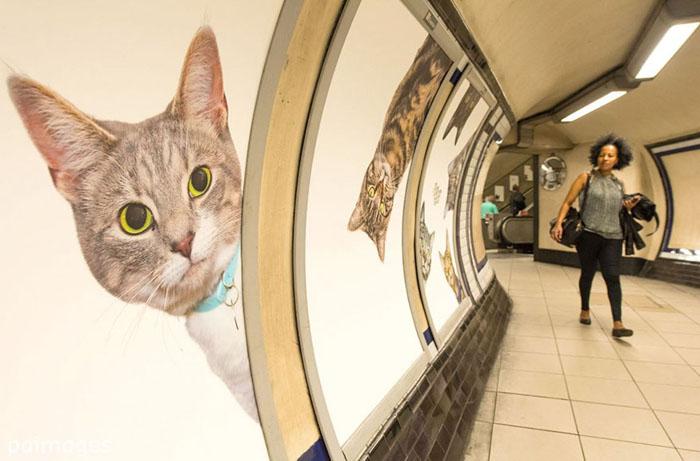 Коты в лондонском метро.