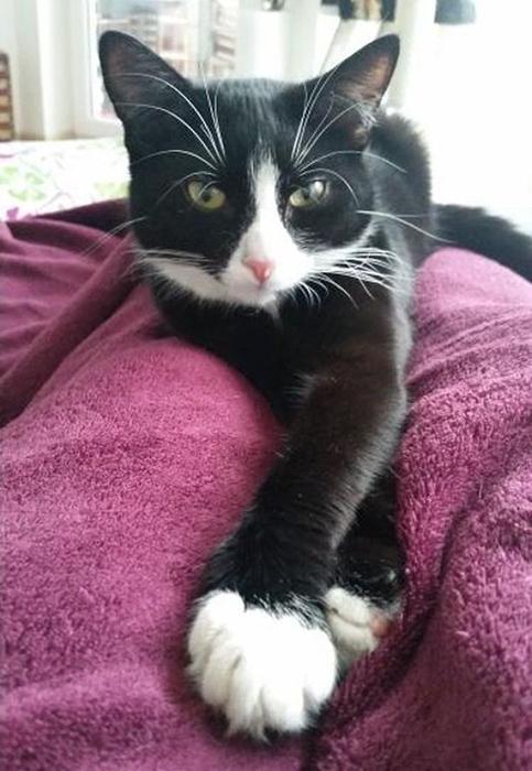 Так выглядела Элли, когда она была еще котенком.