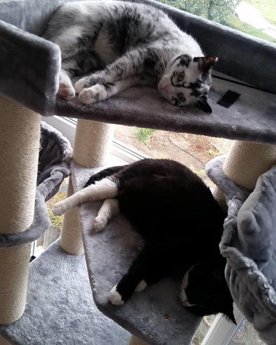 Элли вместе со своей сестрой. Окрас сестрички остался прежним без изменений.