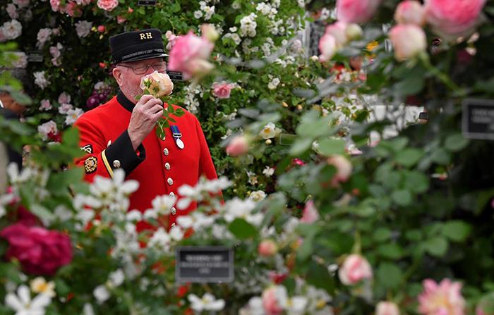Цветочное шоу в Челси проходит каждый год в мае.