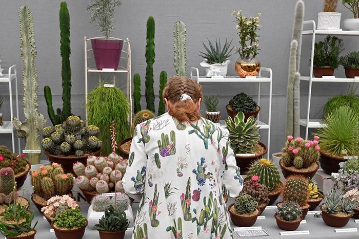 На шоу можно увидеть как целые сады, так и отдельные растения.