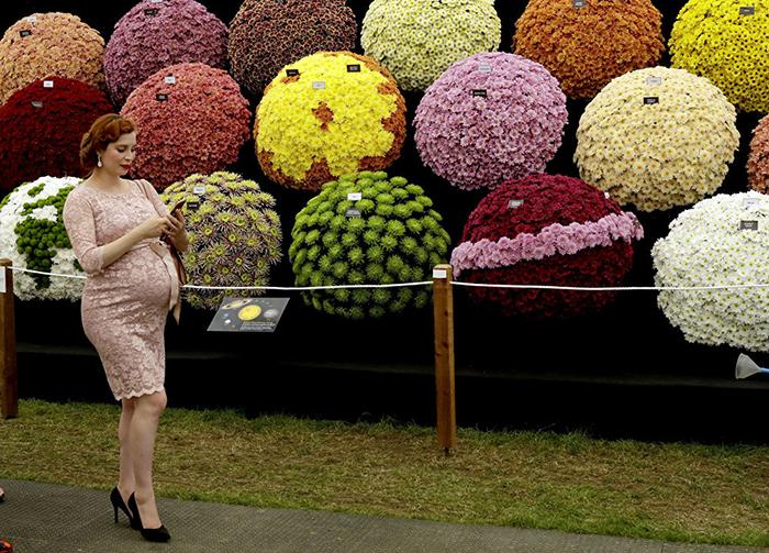 Цветочное шоу в Челси.