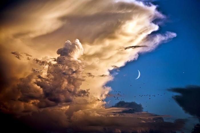 Птицы, облака, Луна, Венера.