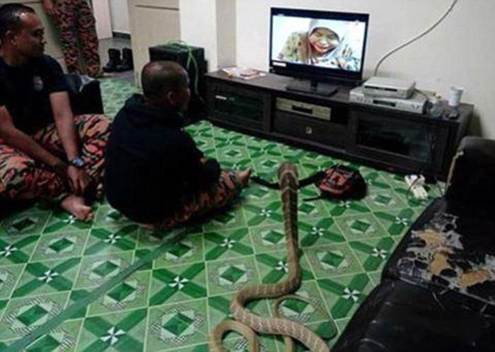 Тихий семейный вечер у телевизора.