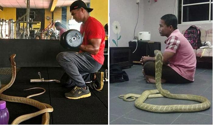 Мужчина женился на трехметровой змее.