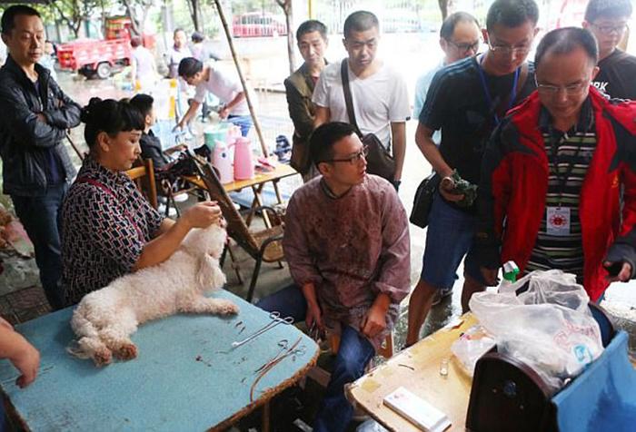 Местная организация по защите прав животных потребовала от ветеринара предъявить документы.