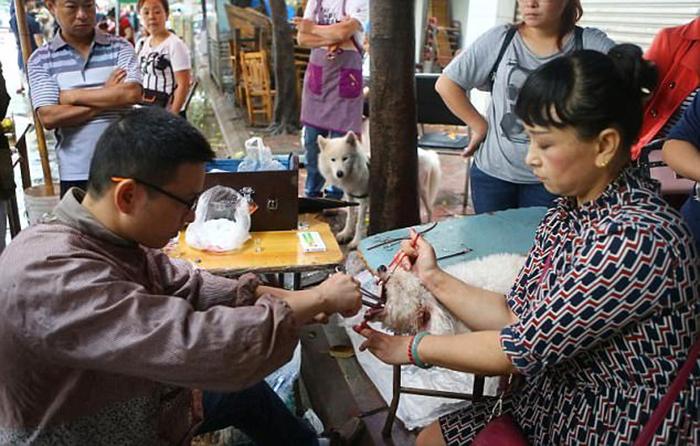 Процедура по удалению голосовых связок у собак стоит от 7 до 15 долларов.