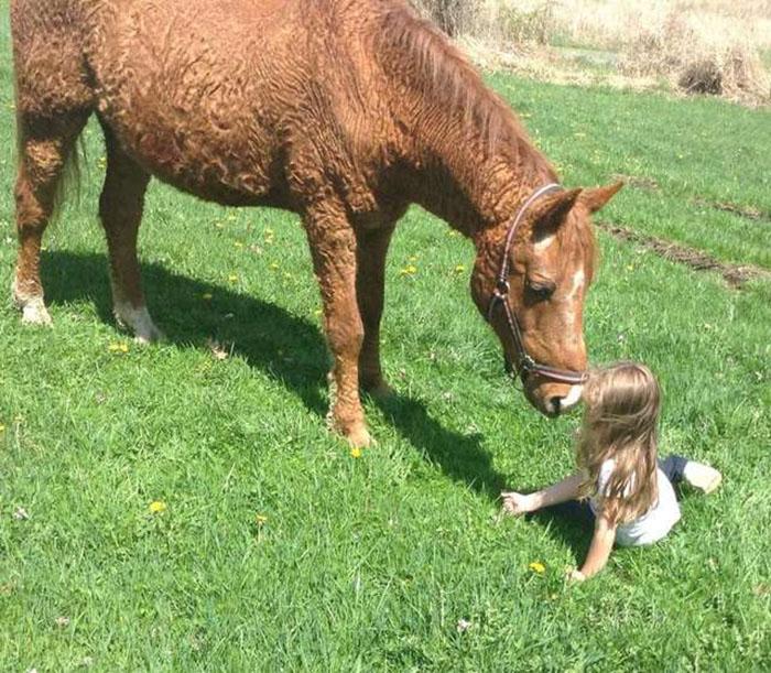 Кучерявые породы лошадей очень дружелюбные и активно используются человеком для различных нужд.