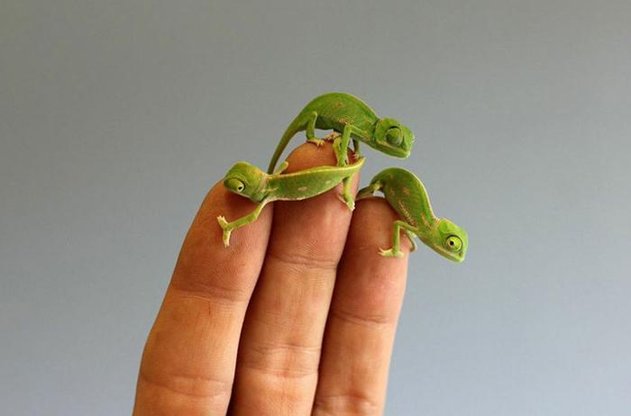 Милые и зеленые.