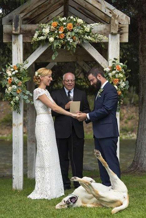 Жизнерадостная собака на свадьбе Конви и Энджи.