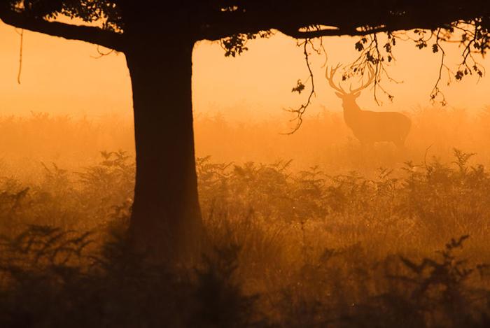 В золотом лесу. Фото: Sam Coppard.