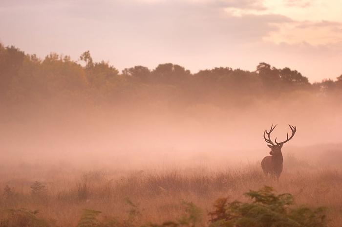 В туманной дымке Ричмонд парка. Фото: Sam Coppard.